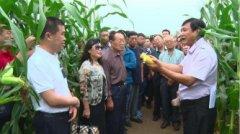 博斯玉米:打造舌尖上的玉米王国