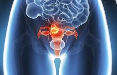 芬力玛孕育解密卵巢的10个趣事